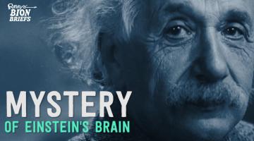 The Mystery of Einstein's Brain
