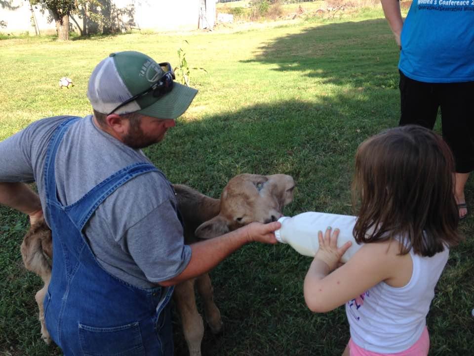 Shane McCubbin feeding Lucky, the Two-Faced Calf