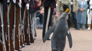 Penguin inspects the Kings Guard