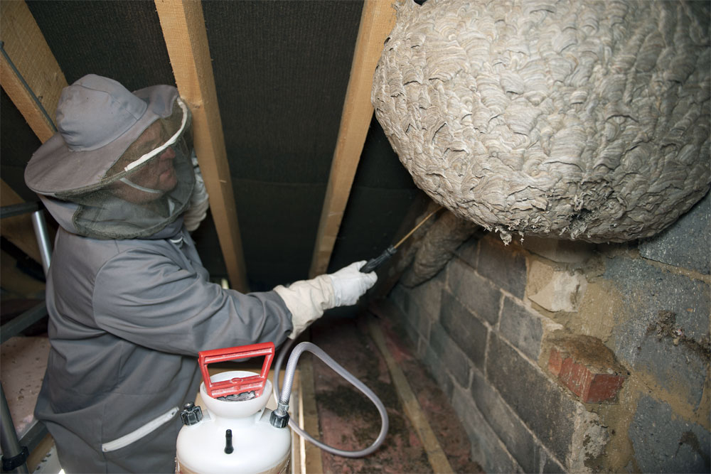 Huge Wasp Nest Discovered In Attic