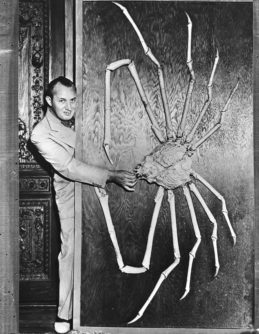 Robert Ripley Spider Crab