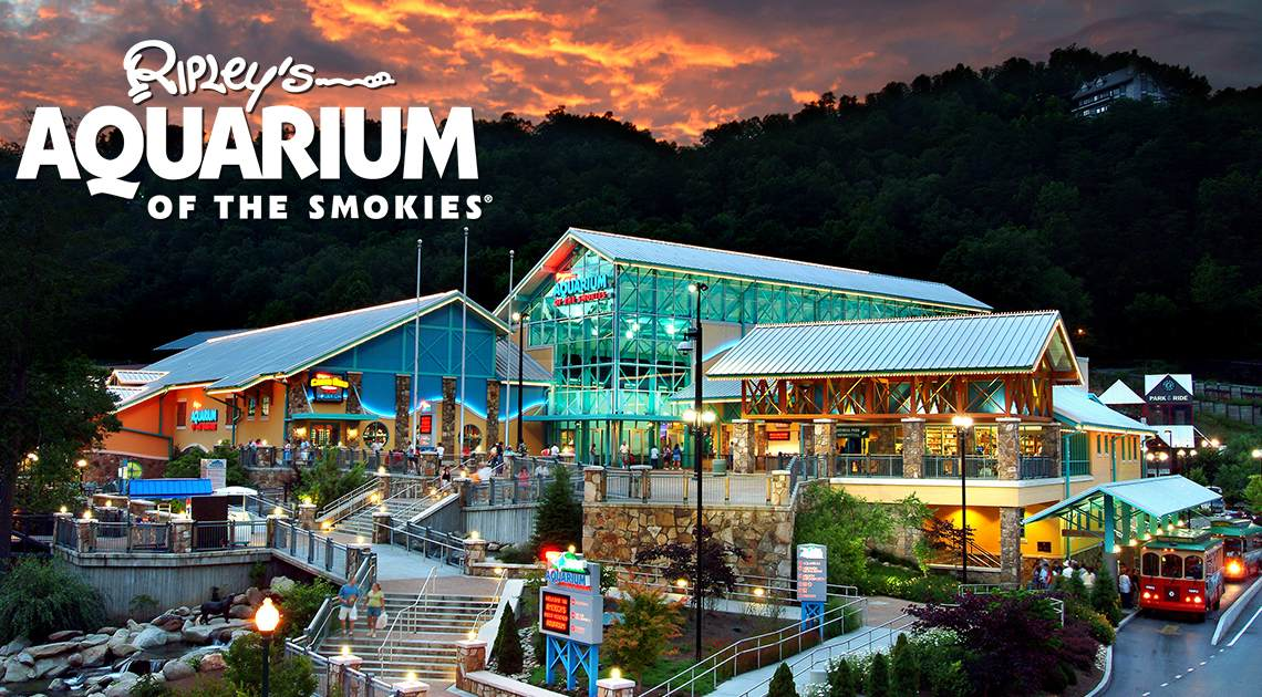 ripley 39 s aquarium of the smokies reports animals safe and