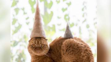 Cats in Hats – Made of Their Own Fur