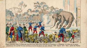 Here the army is shown slaughtering a zoo elephant to feed the population.  Credit: Ph. Jean Loup Charmet © Archives Larbor