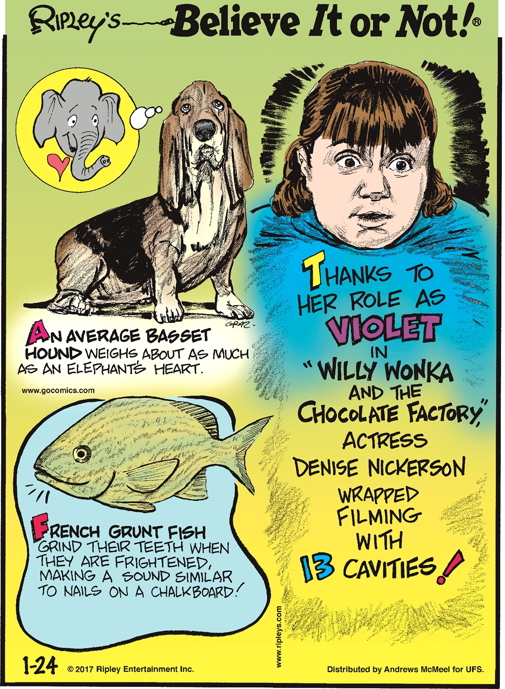 "An average basset hound weighs about as much as an elephant's heart.-------------------- French grunt fish grind their teeth when they are frightened, making a sound similar to nails on a chalkboard!--------------------- Thanks to her role as Violet in ""Willy Wonka and the Chocolate Factory,"" actress Denise Nickerson wrapped filming with 13 cavities!"