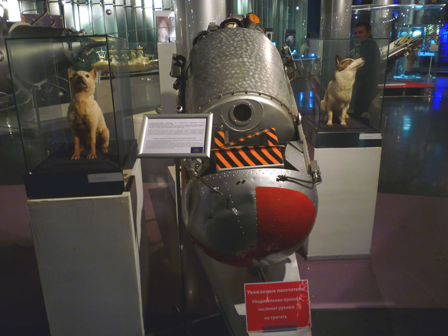 Belka, Strelka, and their Vostok spacecraft.