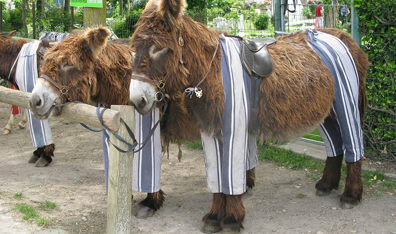 donkey pajamas