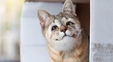 kittens born without eyelids