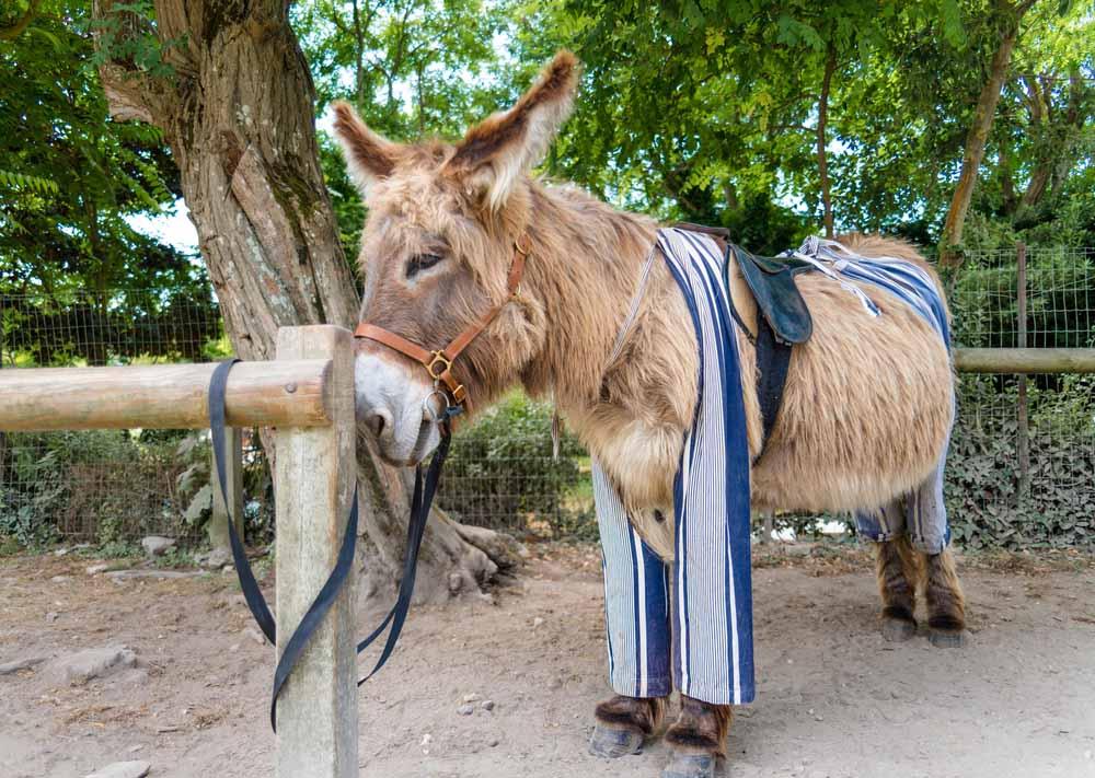 ile de re donkey