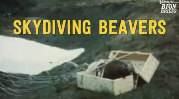 Skydiving beavers