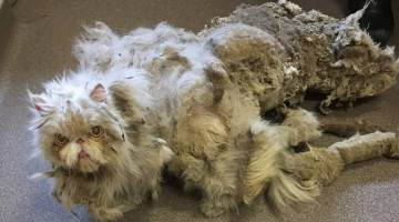 matted fur cat