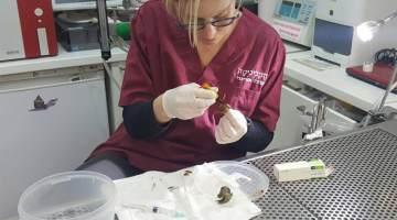 snail shell repair
