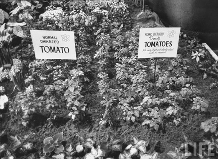 atomic tomato garden