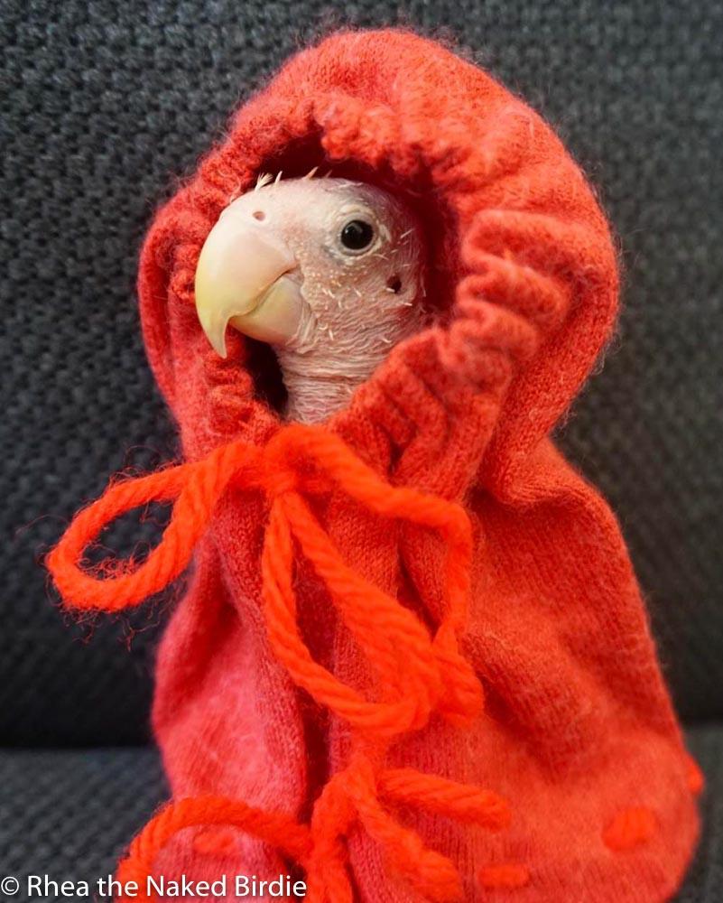 featherless bird in yarn hoodie