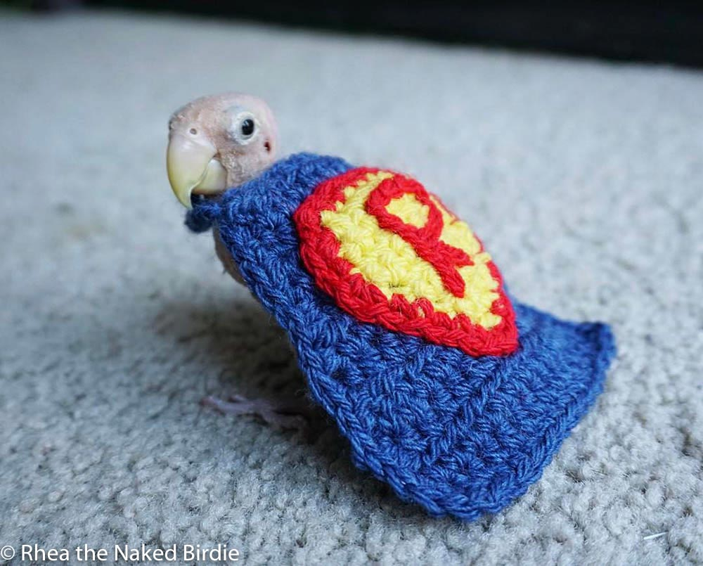 Rhea the featherless bird in a cape/