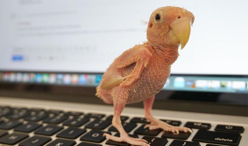 Naked Little Bird Wears A Sock To Keep Her Warm