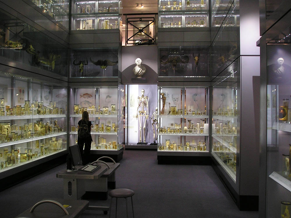 Irish giant hunterian museum
