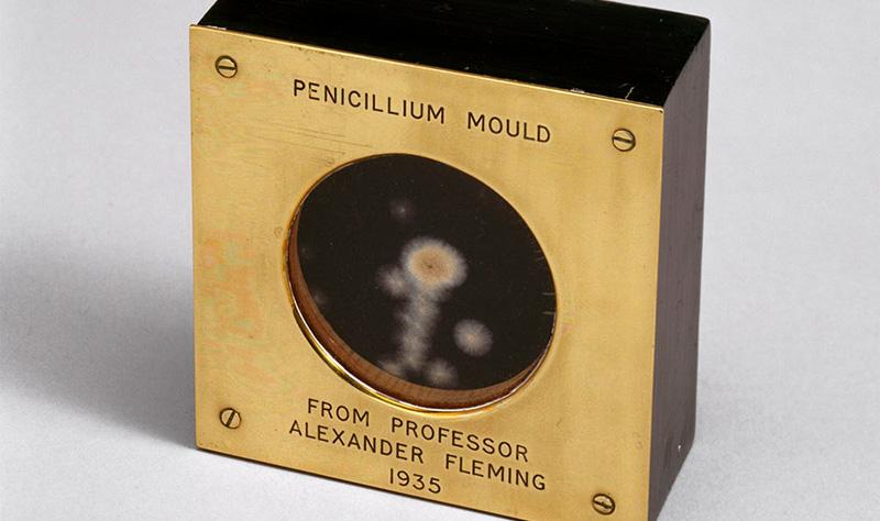 penicillin medallion
