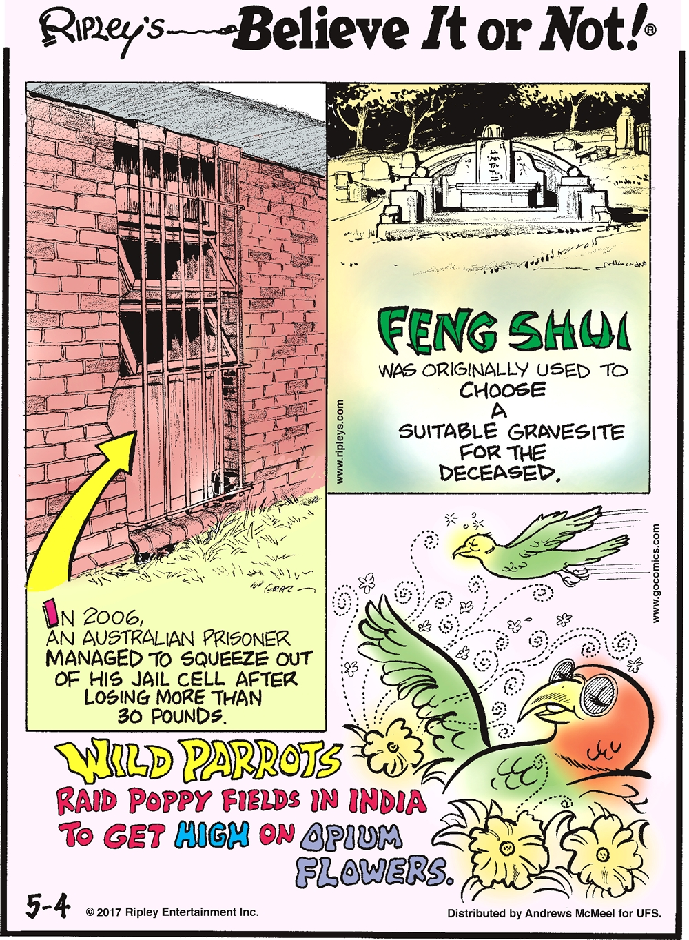 In 2006, an Australian prisoner managed to squeeze out of his jail cell after losing more than 30 pounds.-------------------- Feng Shui was originally used to choose a suitable gravesite for the deceased.-------------------- Wild parrots raid poppy fields in India to get high on opium flowers.