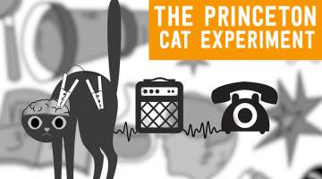 The Princeton Cat Experiment: Turning a Cat into a Phone