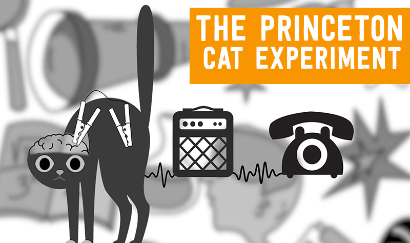 cat-phone-thumb