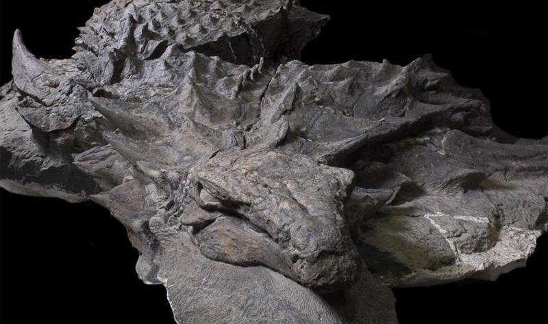 preserved dinosaur face