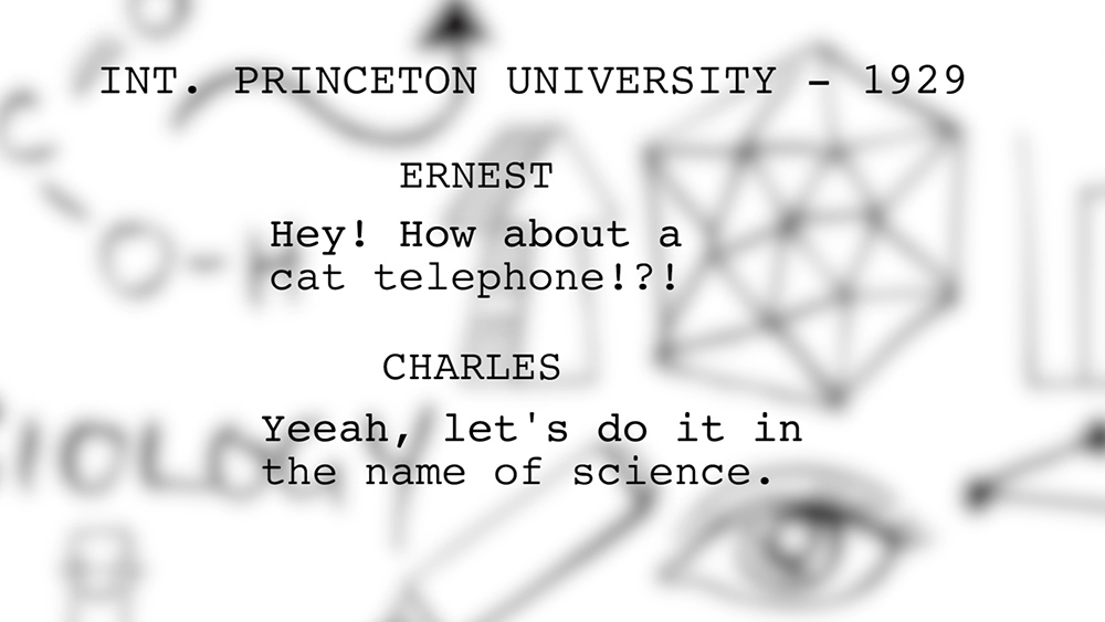 princeton cat experiment
