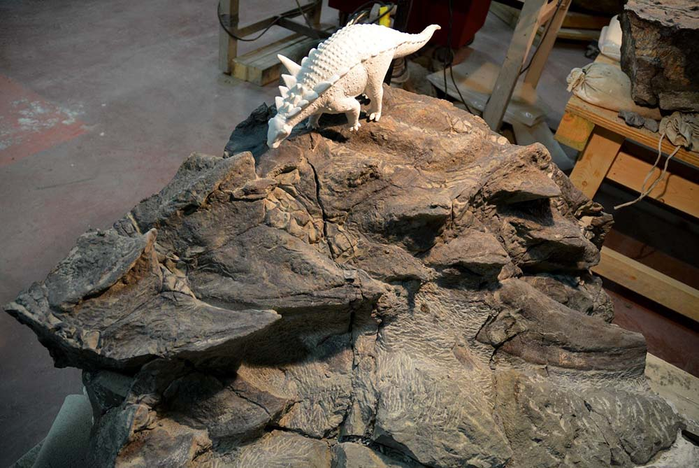 perfectly preserved dinosaur fosssil