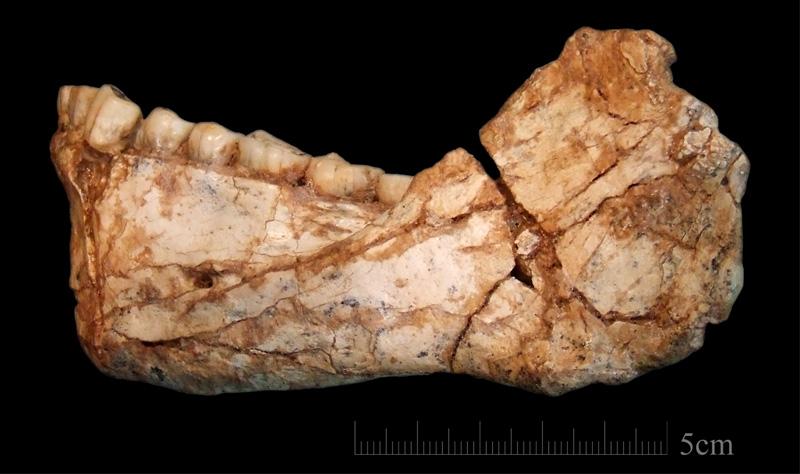 oldest homo sapiens mandible