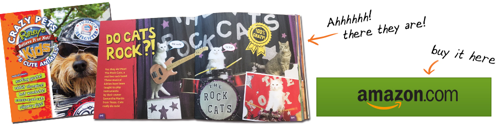 rock cats in Ripley's crazy pets