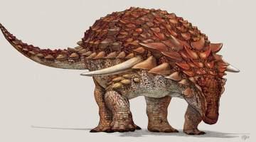 Nodosaur illustration
