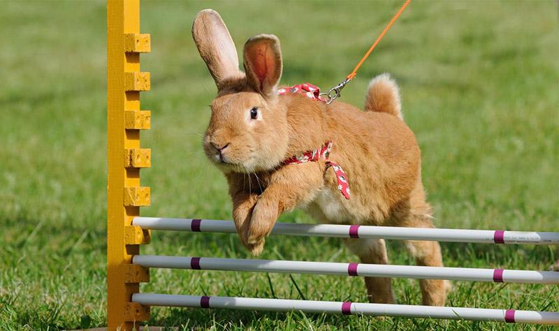 animal-athletics