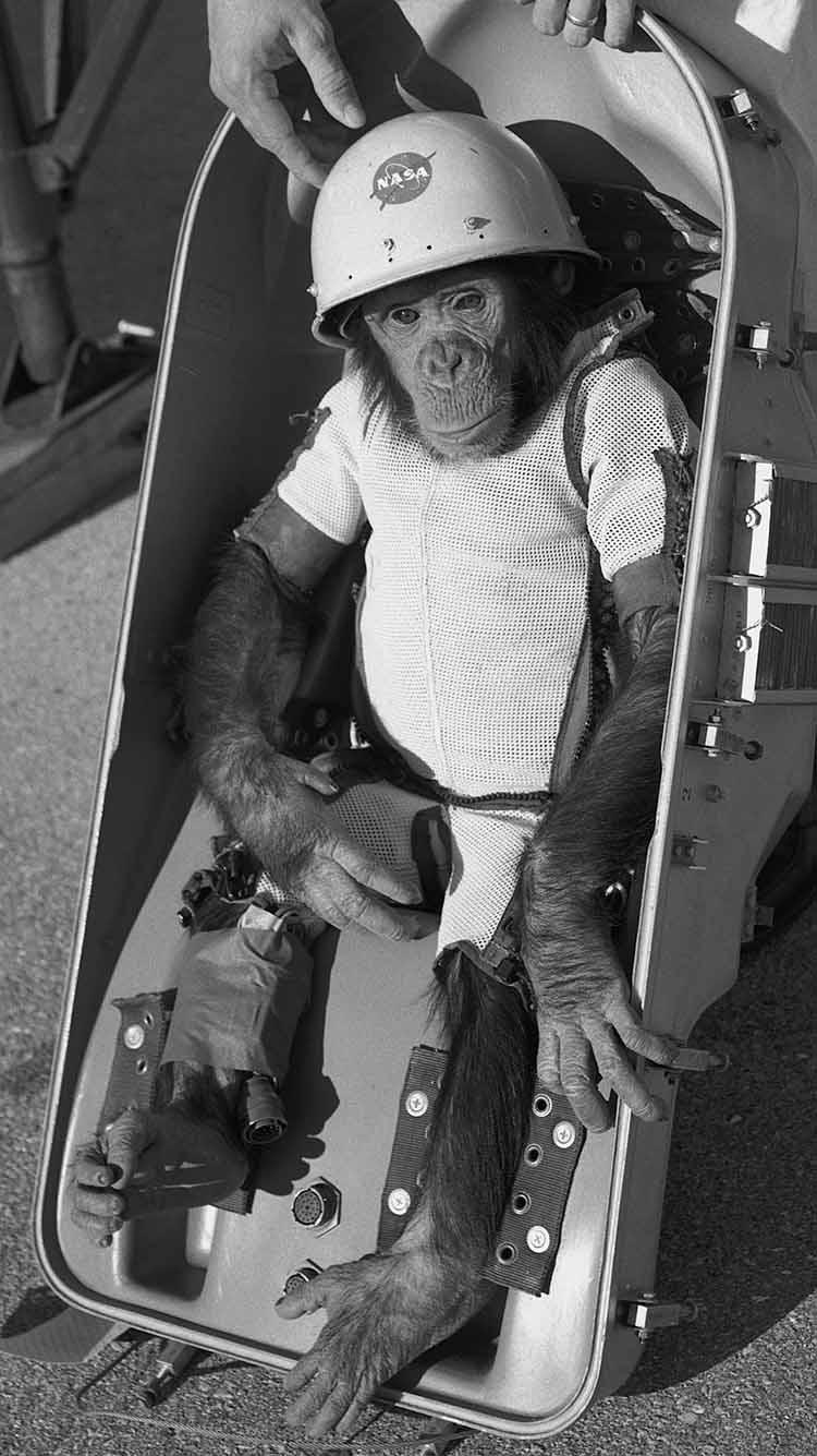 Ham space chimp before takeoff