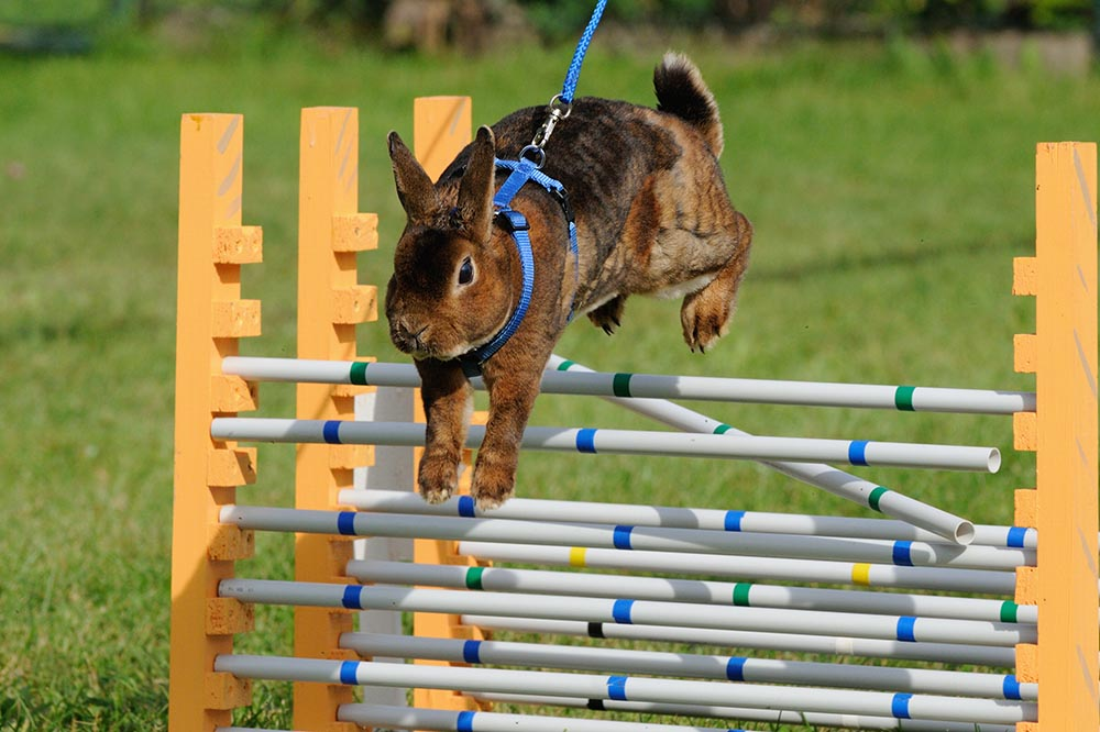 kaninhop animal athletic