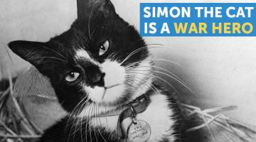 simon the sea cat
