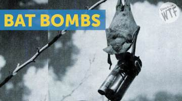 bat bombs
