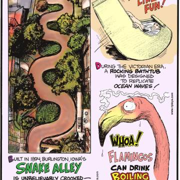 Built in 1894, Burlington, Iowa's Snake Alley is unbelievably crooked - boasting five half-curves and two quarter-curves that span 275 feet!--------------------- During the Victorian Era, a rocking bathtub was designed to replicate ocean waves!-------------------- Flamingos can drink boiling water!
