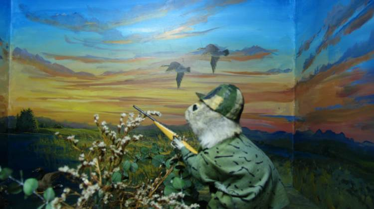 gopher museum hunter