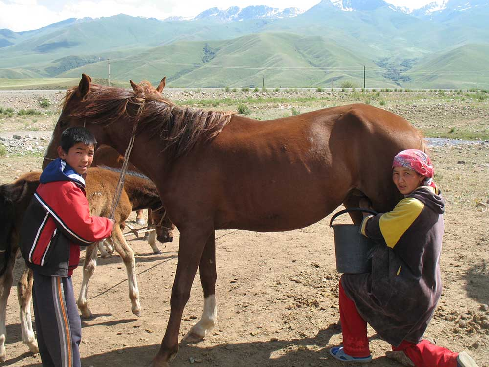 horse milking