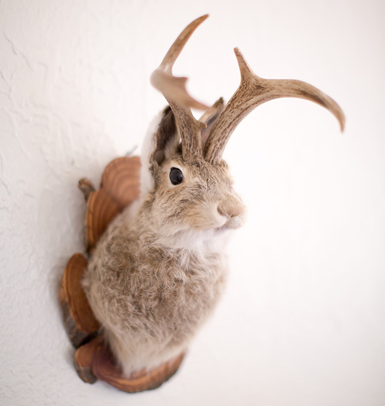 gaff taxidermy jackalope