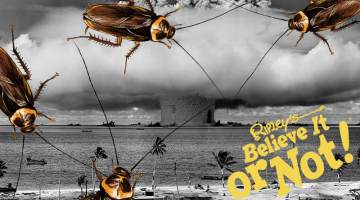 cockroaches survive nuclear apocalypse