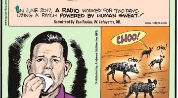 "In June 2017, a radio worked for two days using a patch powered by human sweat! Submitted by Dan Paulun, W. Lafayette, OH.-------------------- University of Bath Professor Matthew Goodwin ate part of his book ""Brexit"" on live television after incorrectly predicting the United Kingdom's general election results. Submitted by Dan Paulun, W. Lafayette, OH.-------------------- African wild dogs sneeze at each other to communicate!"