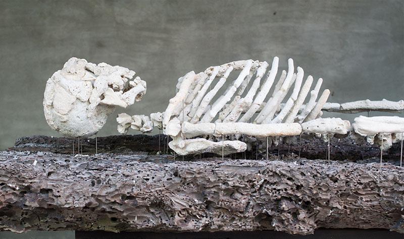 coral skeleton