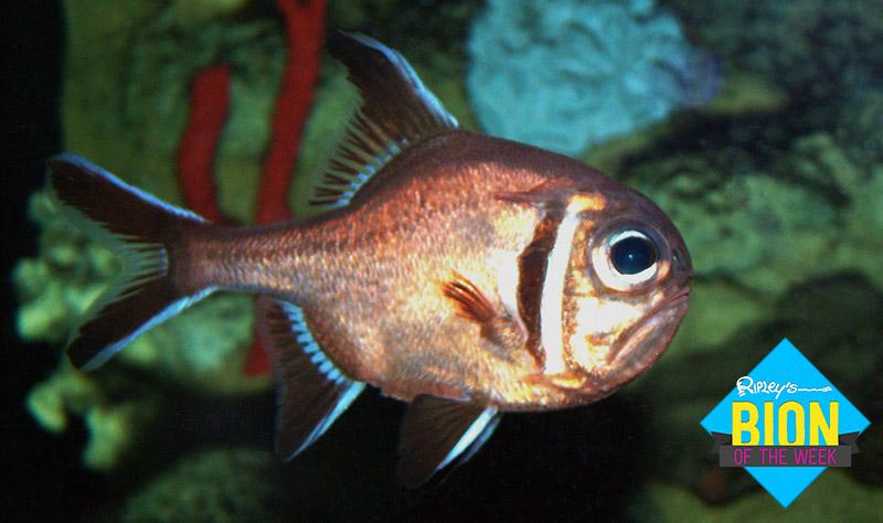 depressed-fish