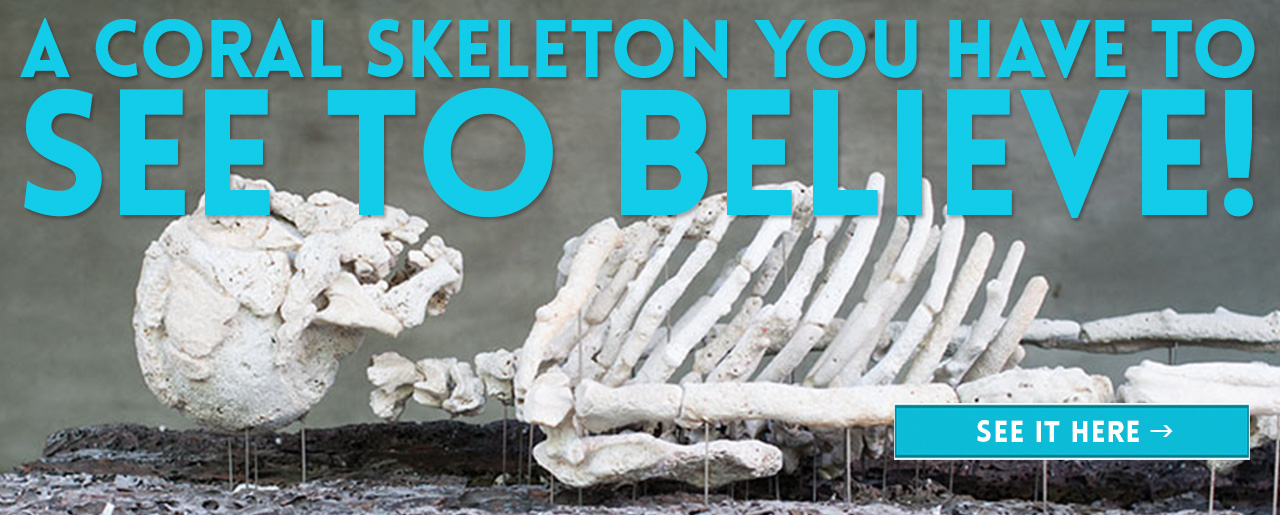 A CORAL SKELETON YOU HAVE TO SEE TO BELIEVE!