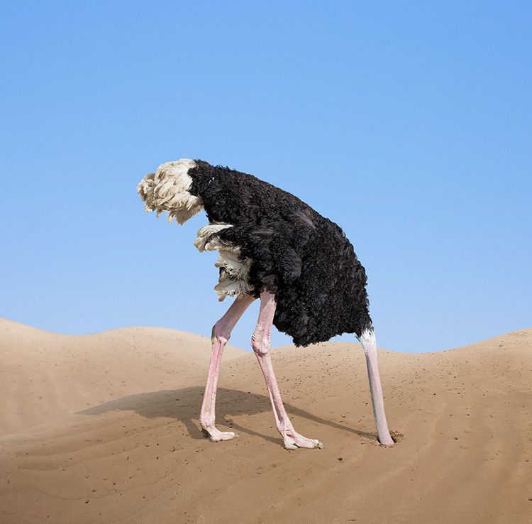 Image result for ostrich head in sand