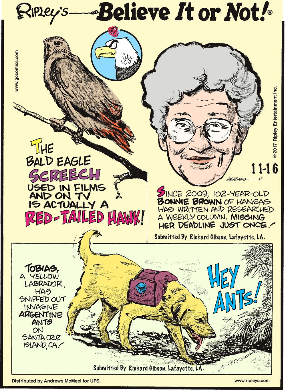 The bald eagle screech used in films and on TV is actually a red-tailed hawk!-------------------- Since 2009, 102-year-old Bonnie Brown of Kansas has written and researched a weekly column, missing her deadline just once! Submitted by Richard Gibson, Lafayette, LA.-------------------- Tobias, a yellow labrador, has sniffed out invasive Argentine ants on Santa Cruz Island, CA! Submitted by Richard Gibson, Lafayette, LA.