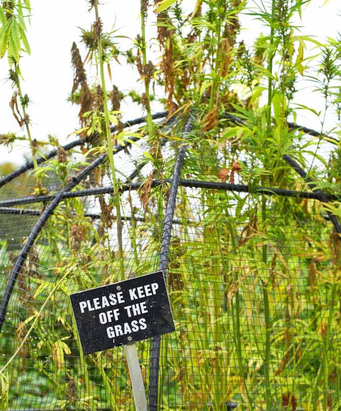 poison garden cannabis