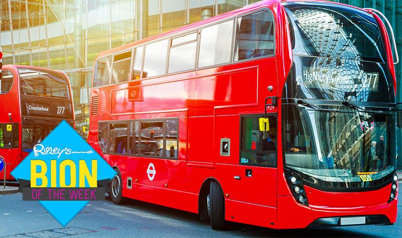 coffee powered buses