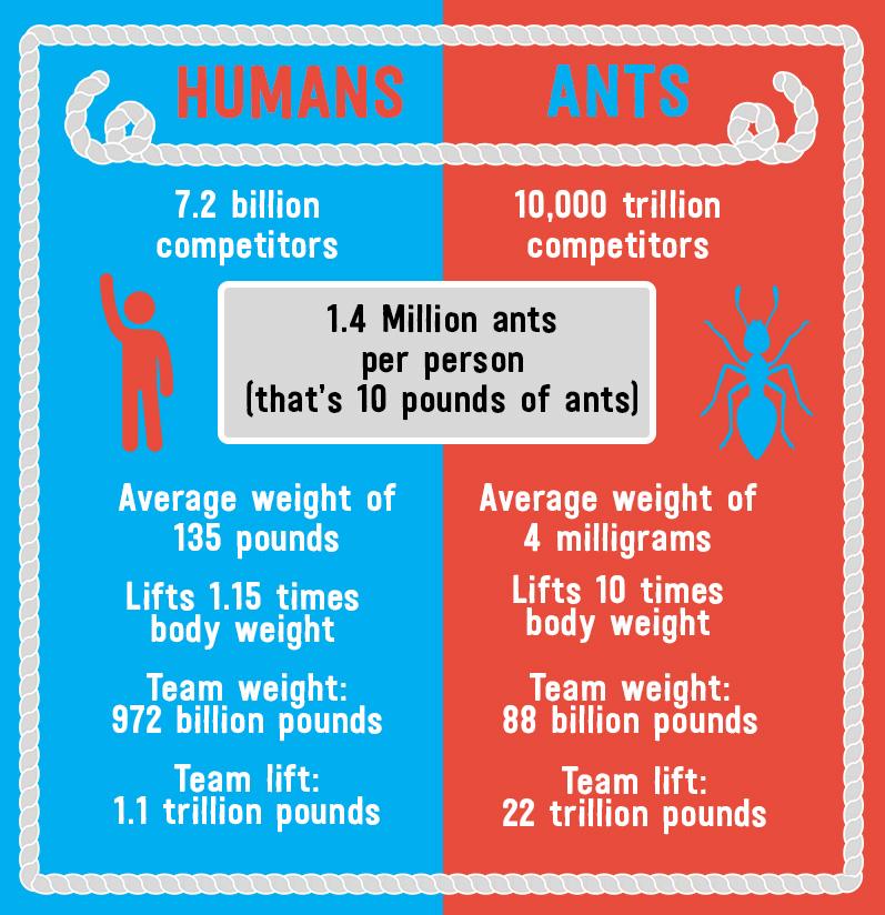 ants vs humans